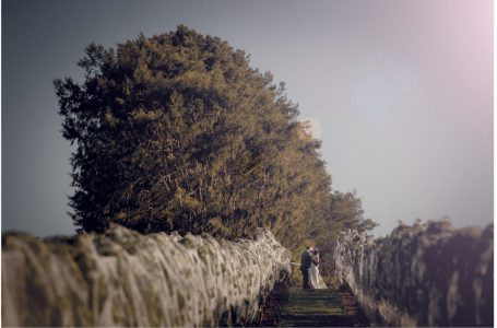 Soljan's Estate winery Auckland wedding photo in the vines