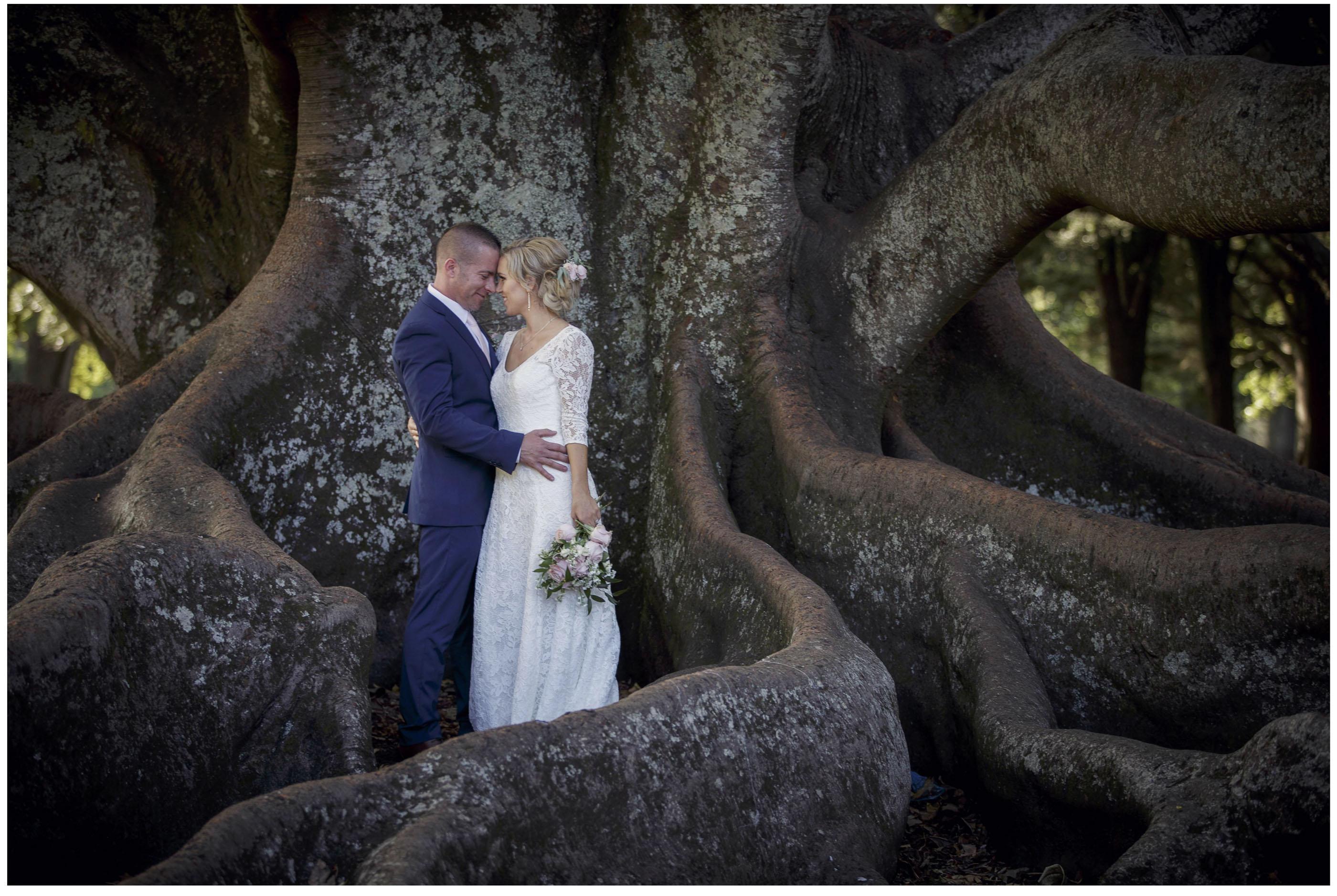 Bride in wedding dress kisses groom in massive tree, morton Bay Fig tree, Auckland Domain Wedding photo, Auckland Wedding Photographers