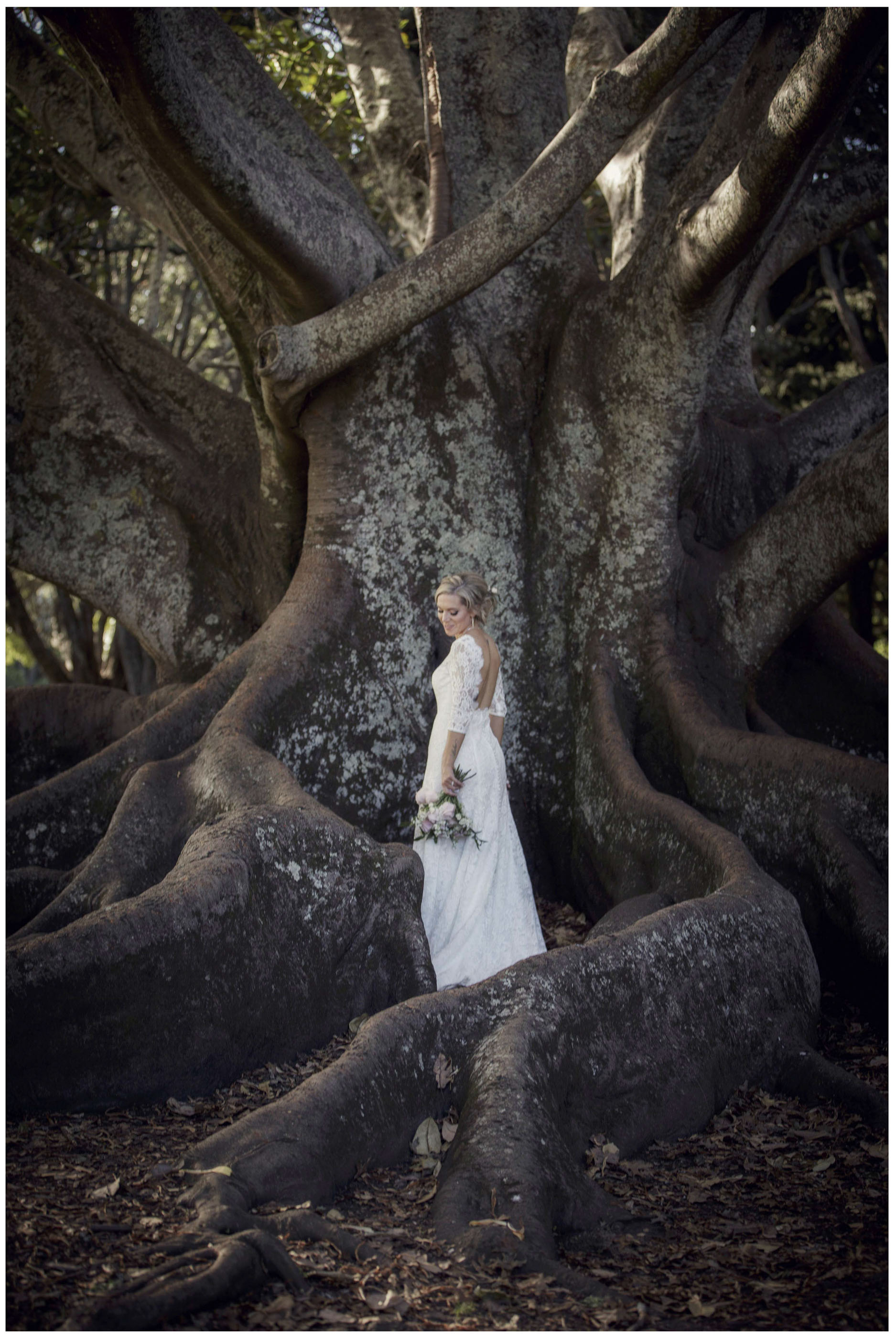 Bride in wedding dress posses in massive tree, morton Bay Fig tree, Auckland Domain Wedding photo, Auckland Wedding Photographers